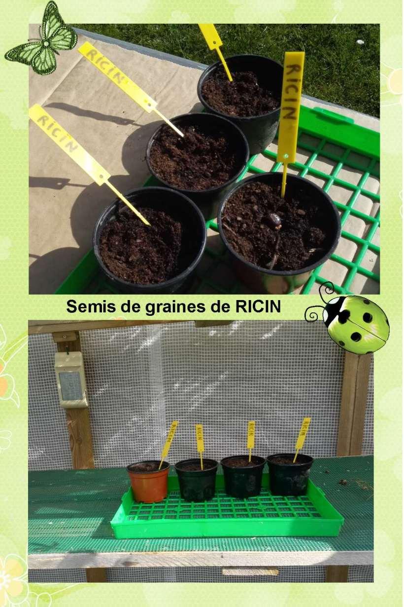 RICIN Semis
